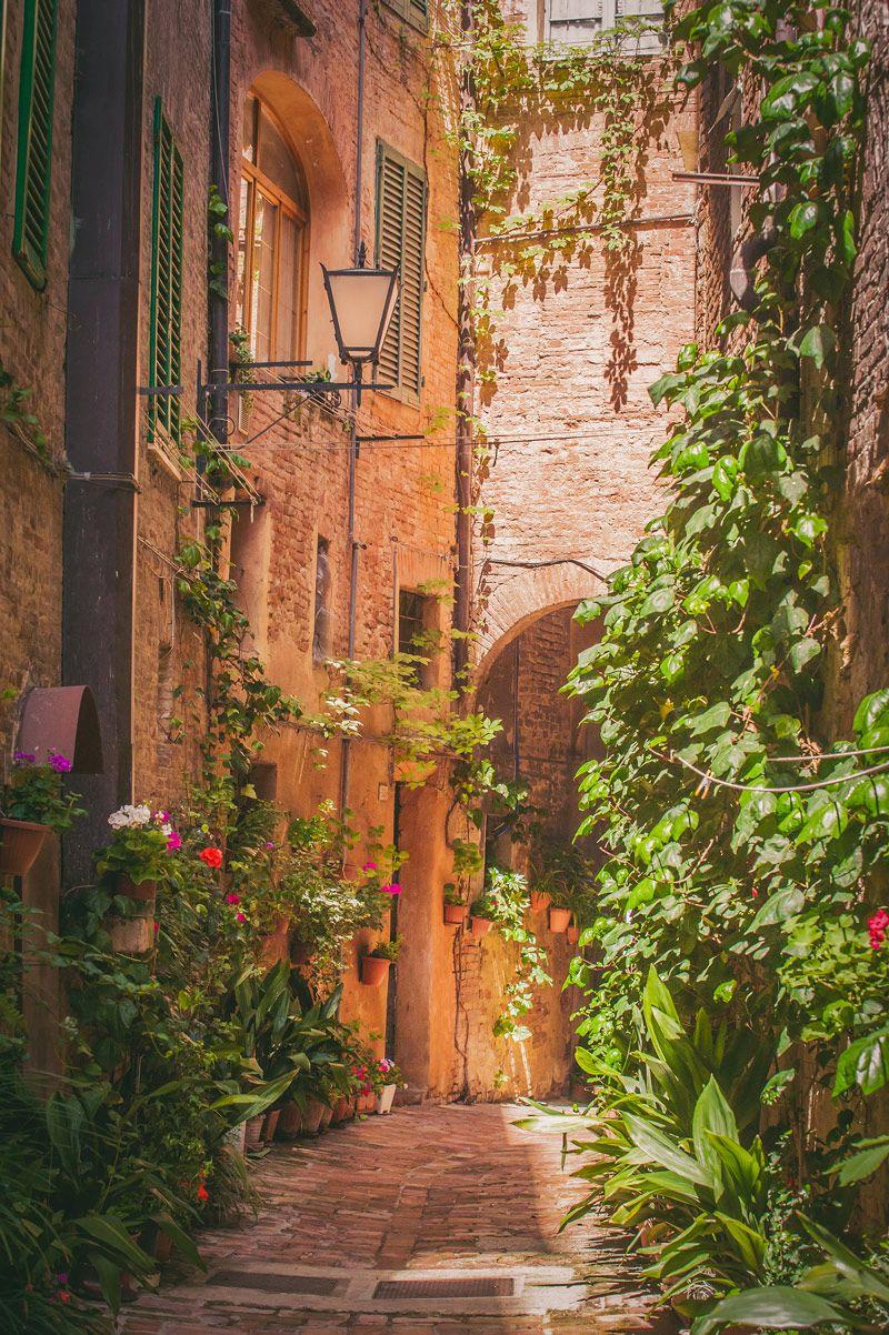 Street in Siena Old Town