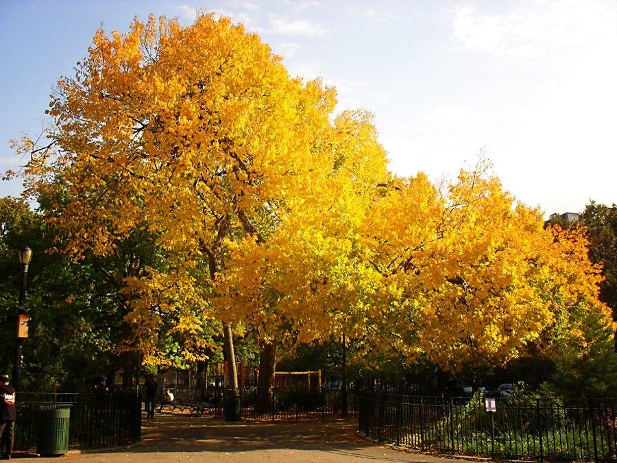 Tompkins Square Park, East Village