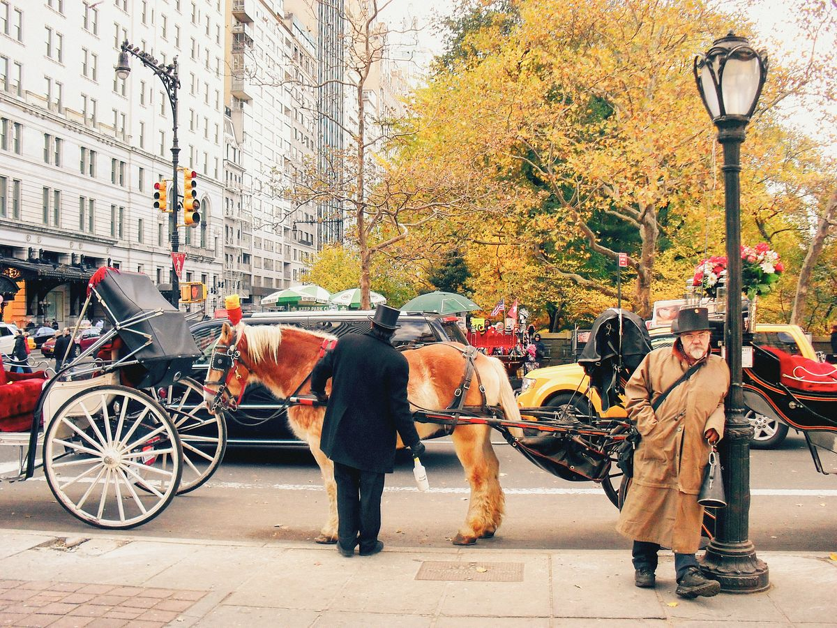 Horse and Carriage in Central Park