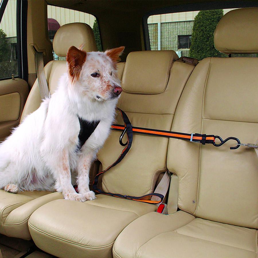 Dog seat belt