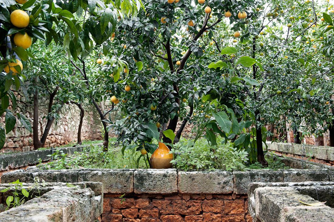 Orangery in Puglia