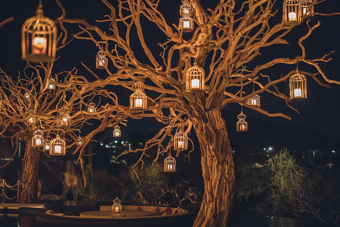 Lantern-laden trees
