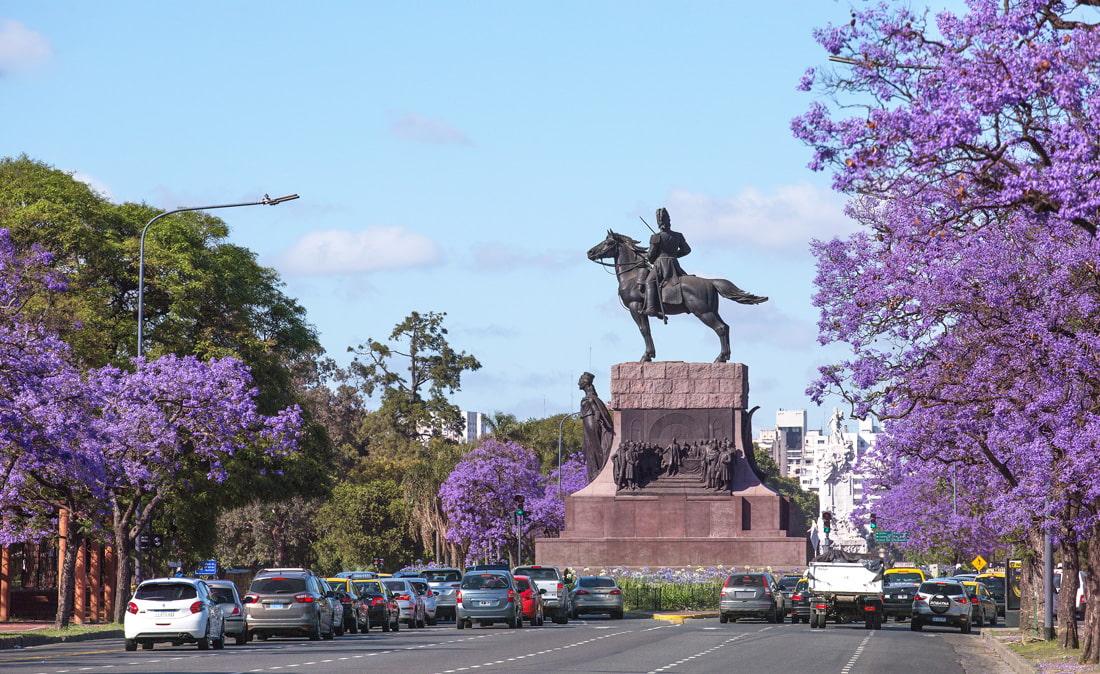 Jacaranda trees in Buenos Aires