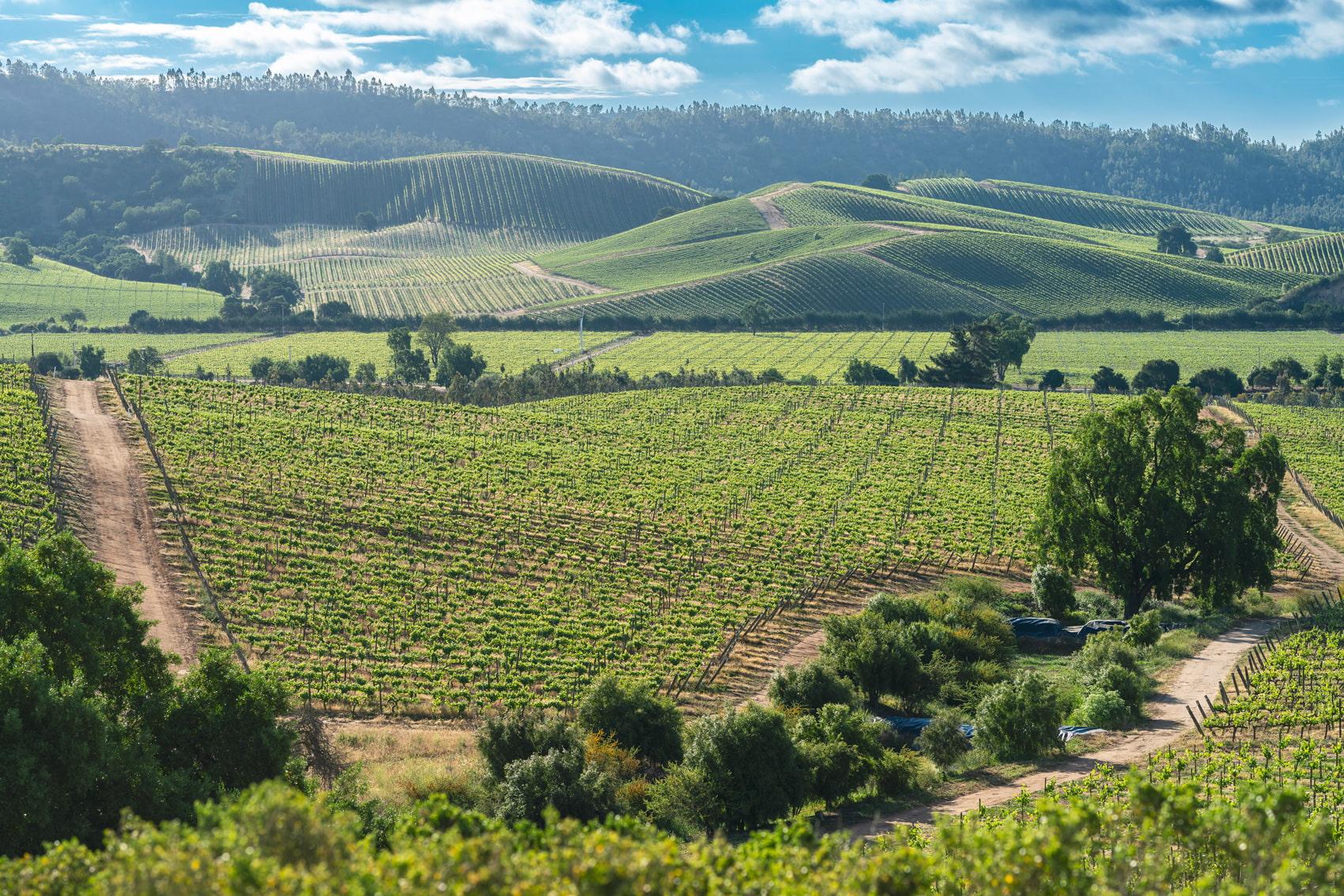 Casablanca Wine Valley, Chile