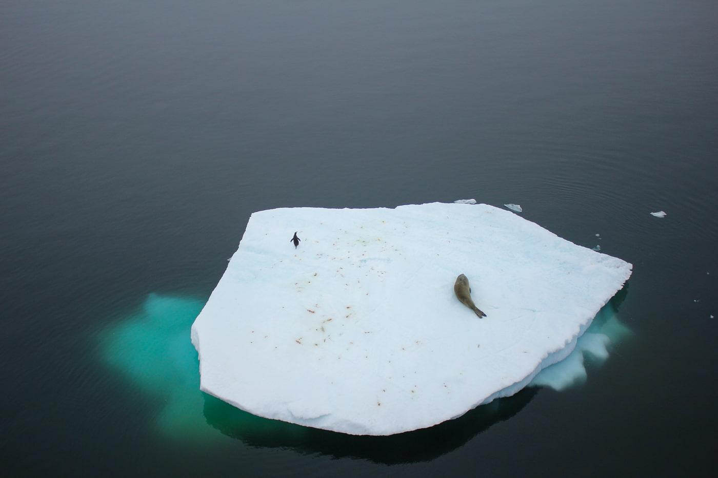 Global warming in Antartica