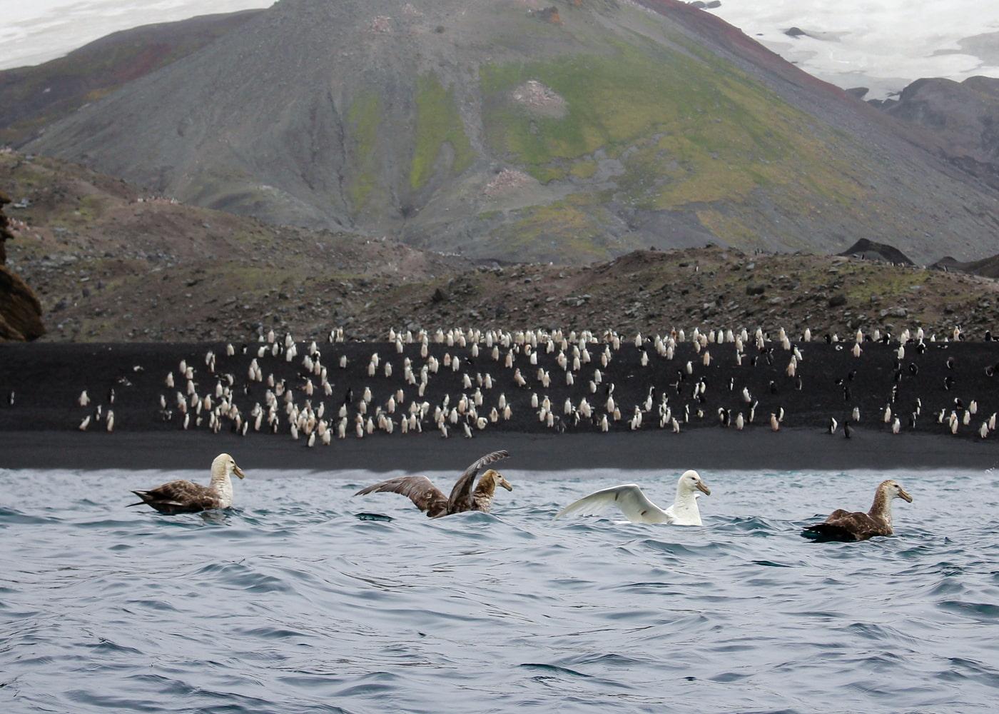 Antarctica for photographers