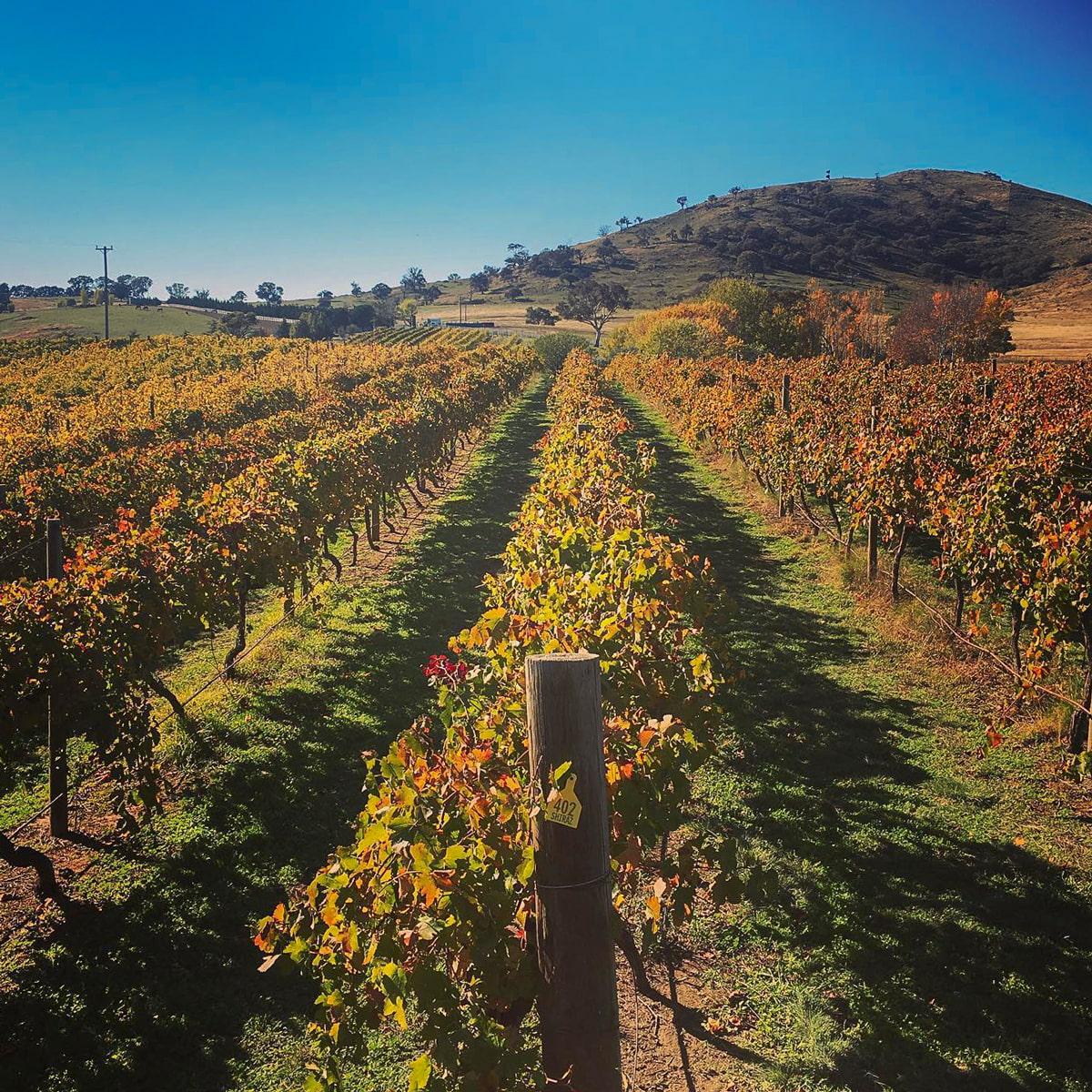 Canberra District wine region
