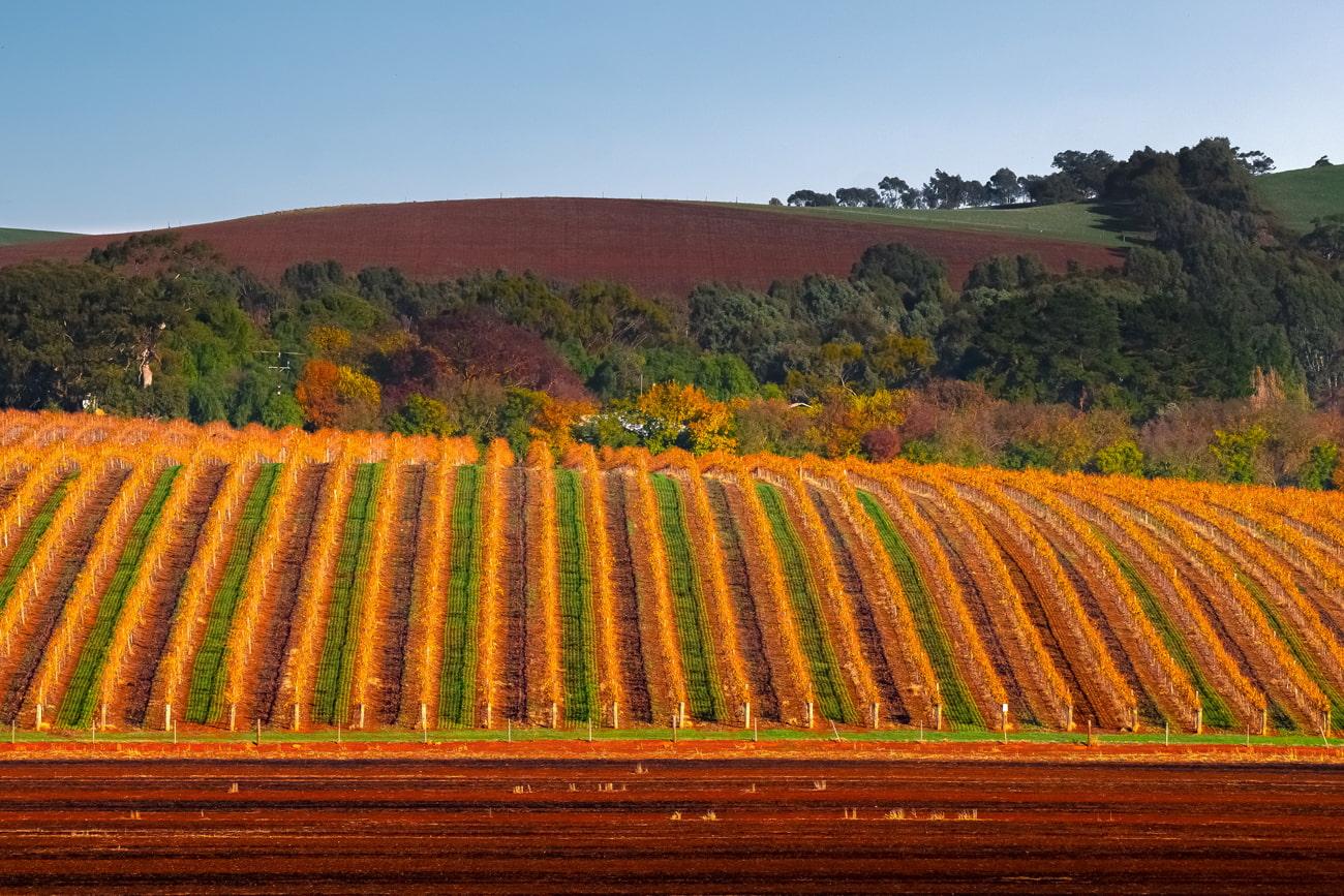 Underrated wine region in Australia