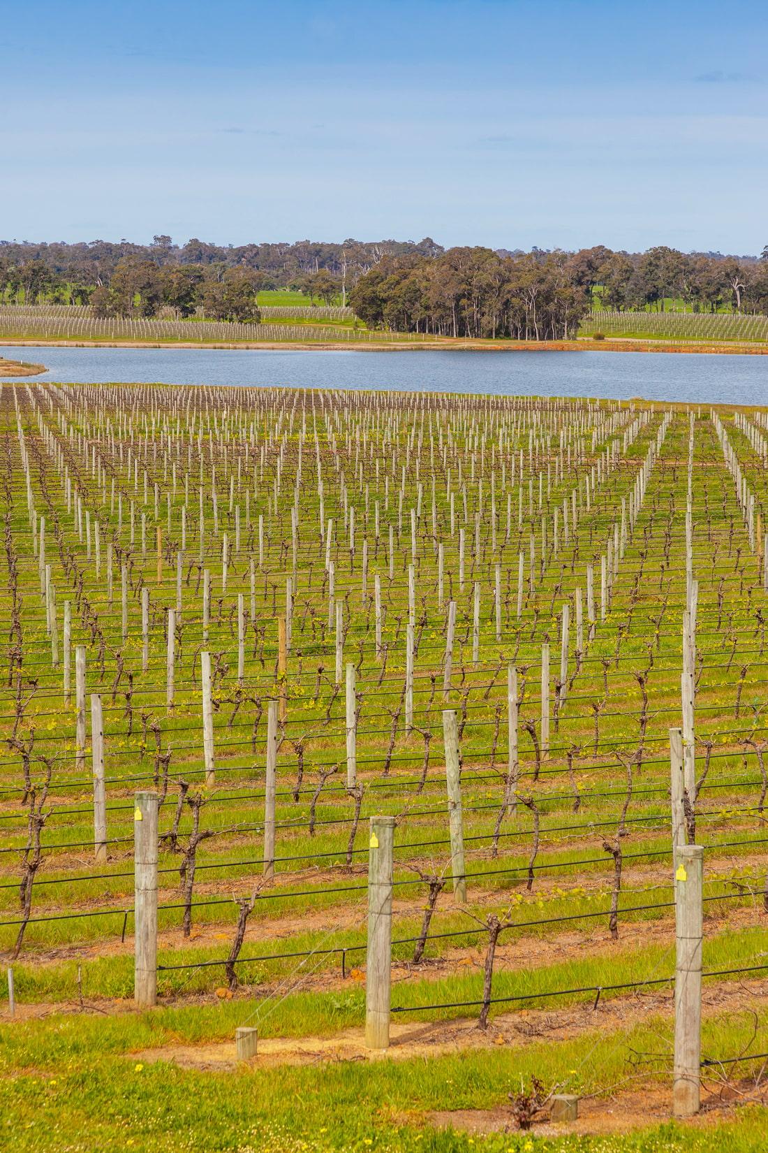 Australia's finest wine region